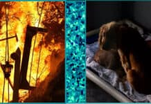 11 year old girl dies in house fire heroically trying to save her puppies