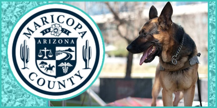 Arizona Police Officer Suspended After His K9 Dies in Hot Car