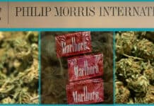CEO says Marlboro maker Philip Morris is eyeing the pot market