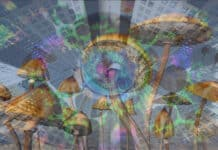 New York University launching Center for Psychedelic Medicine in Manhattan