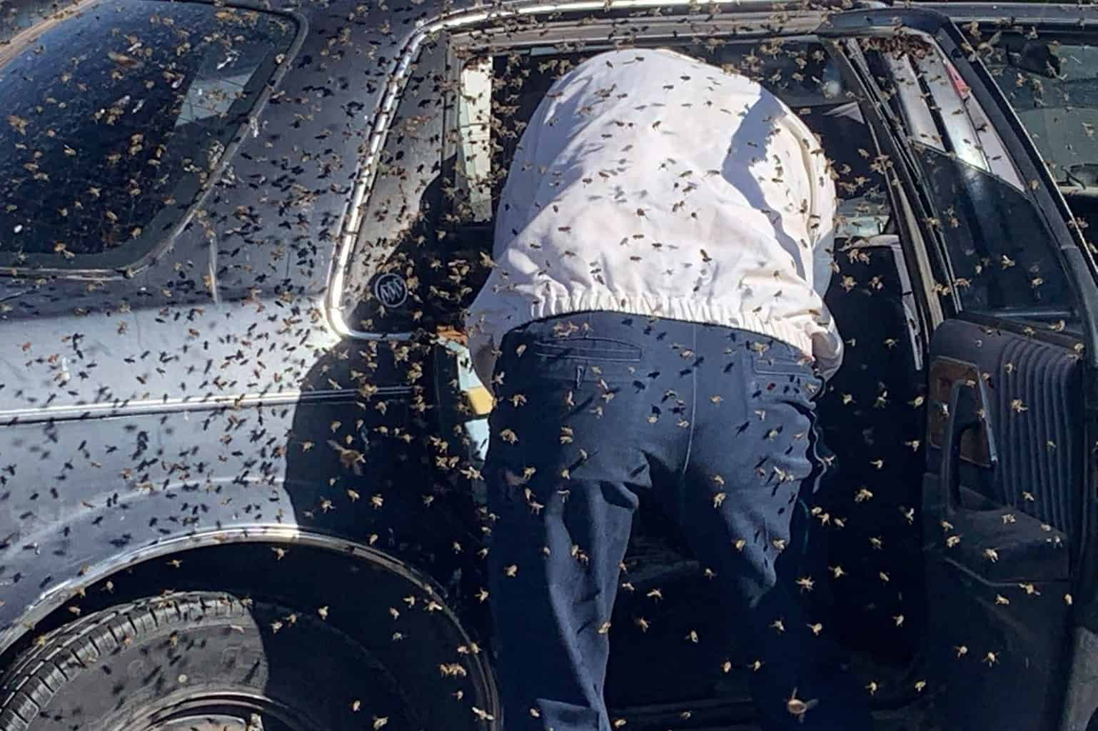 Off duty firefighter braves swarm of bees to rescue man 1
