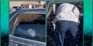 Off duty firefighter braves swarm of bees to rescue man featured image