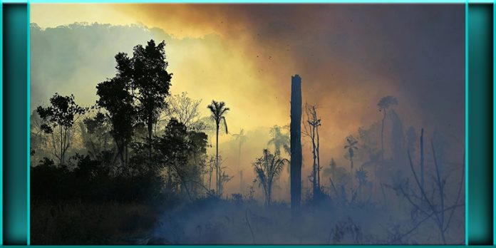 illegally lit section of Amazon rainforest fires south of Novo Progresso Para state Brazil