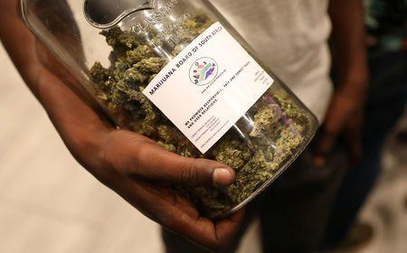 cannabis expo africa african first without marijuana
