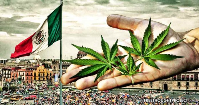 mexico marijuana cannabis recreational medical legal legalized legalization ruling